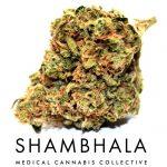 Shambhala Medical Cannabis Collective