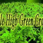 Mile High Green Cross recreational marijuana