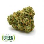 The Green Solution medical marijuana