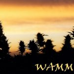 WoMen's Alliance For Medical Marijuana cannabis