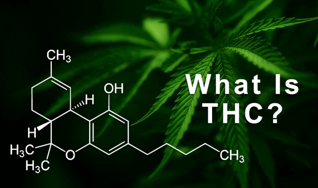 why thc stay in your system