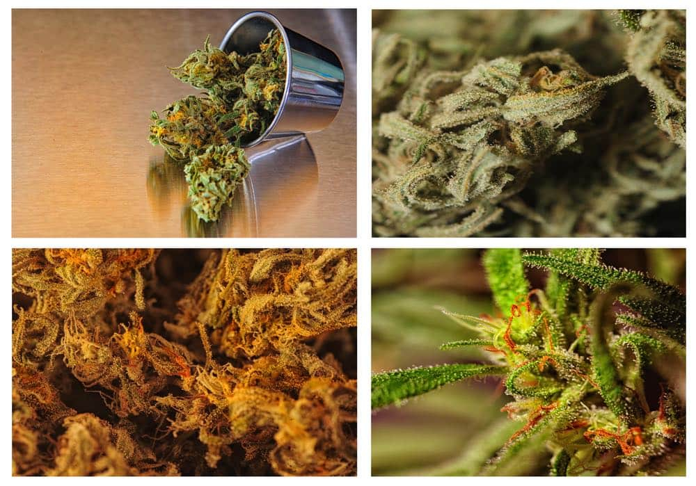 Marijuana Collage