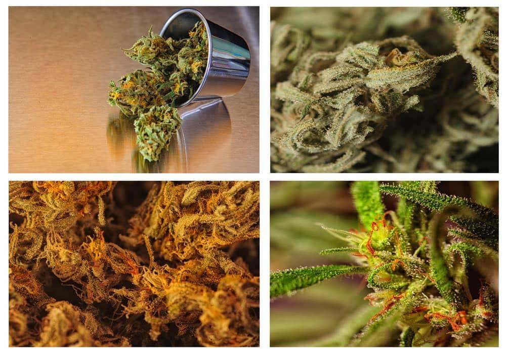 Marijuana Collage