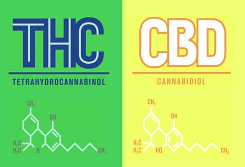 Cannabis Facts | The Difference Between THC and CBD