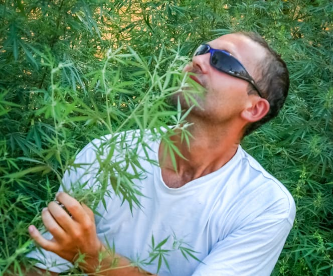 how to determine the quality of weed