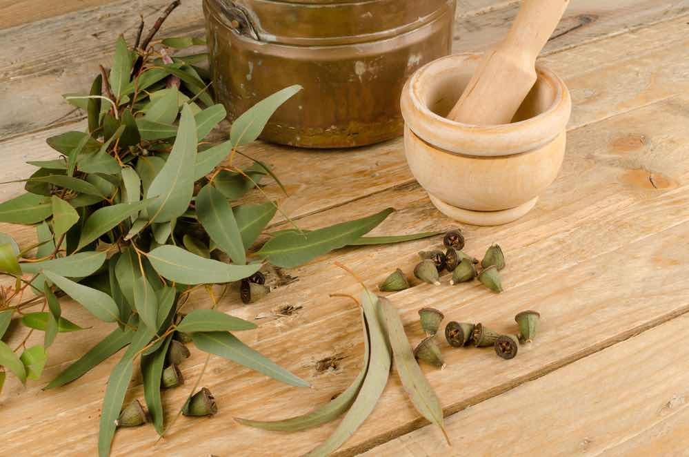Eucalyptus Tobacco Alternative for Rolling a Joint