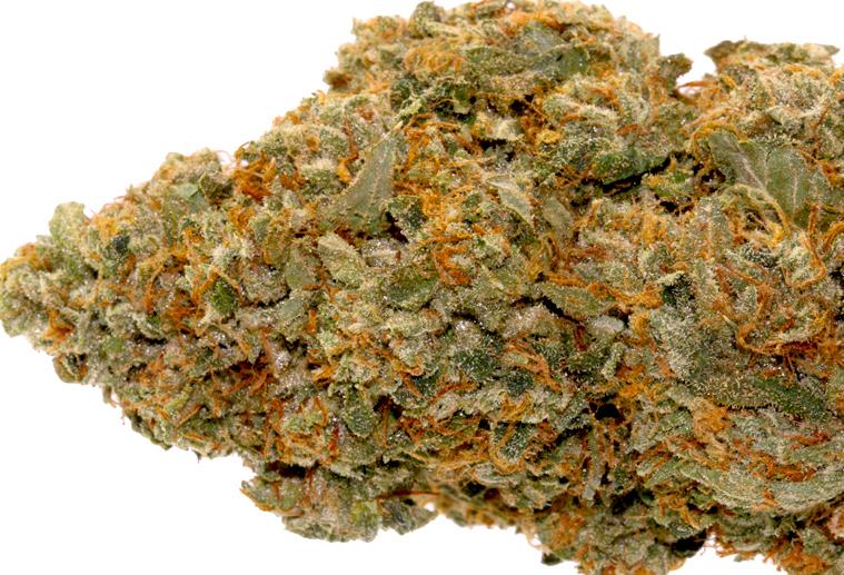 Madman-OG-Marijuanabreak