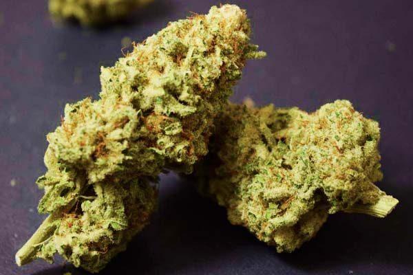 ACDC Marijuana Strain