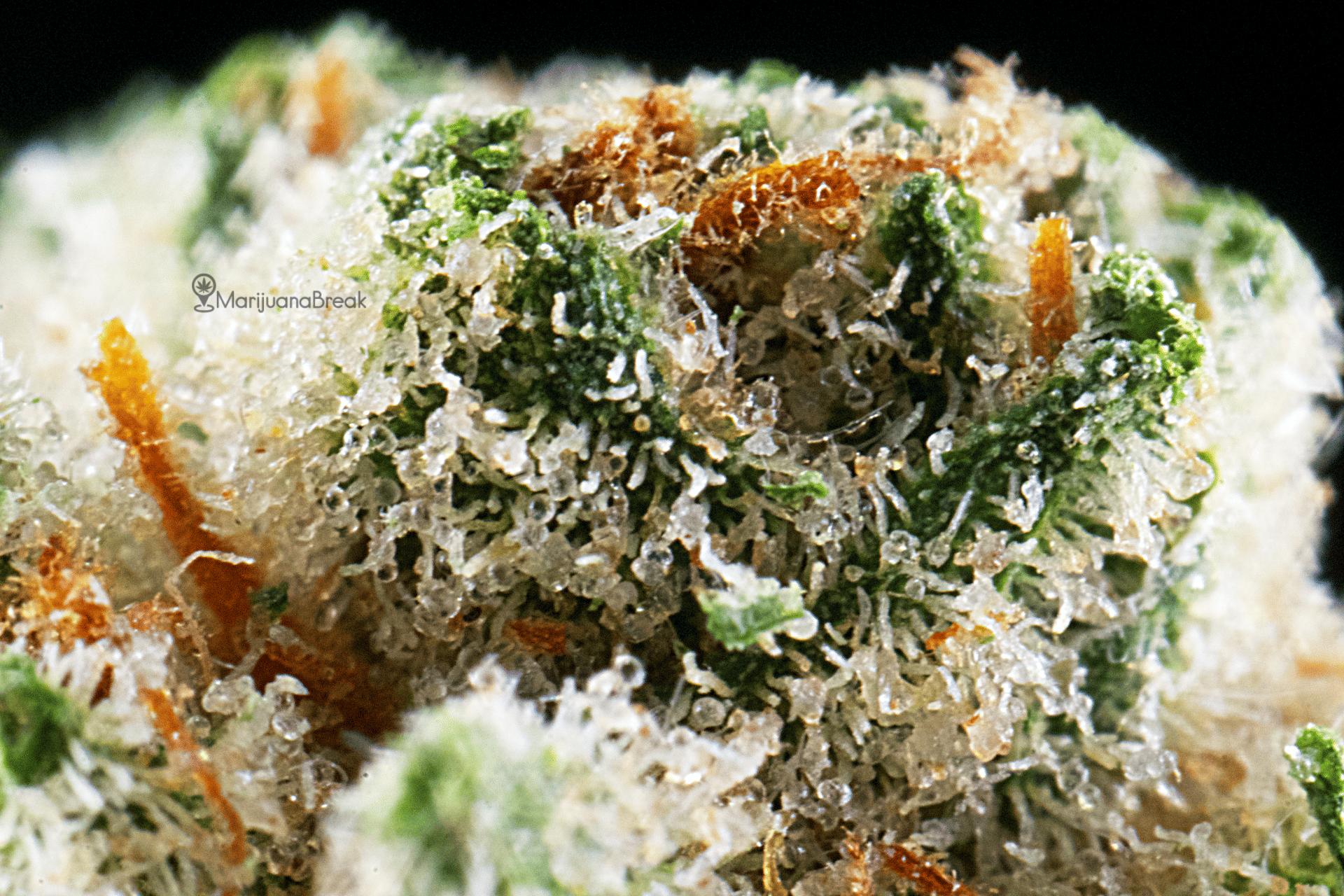 Fire OG Marijuana Strain Review