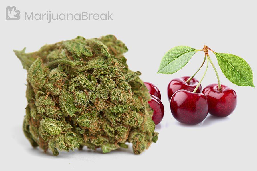 cherry kola strain