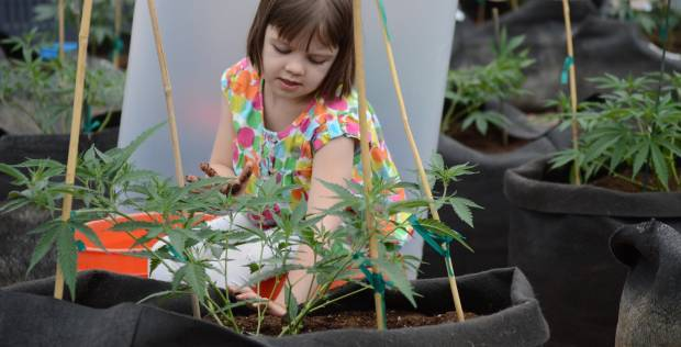 cannabis strain helps charlotte
