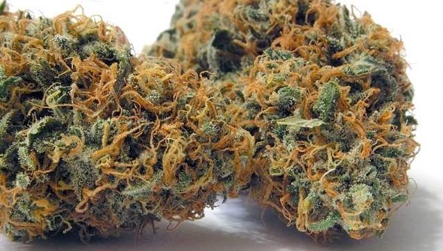 Chocolope Marijuana Bud