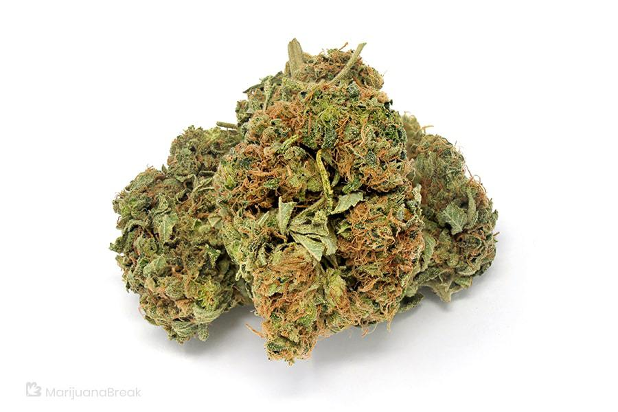 larry bird kush strain