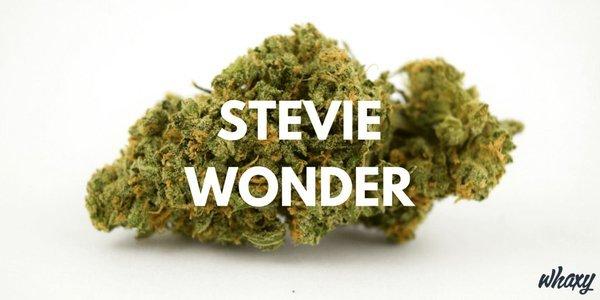 Stevie Wonder Cannabis Strain