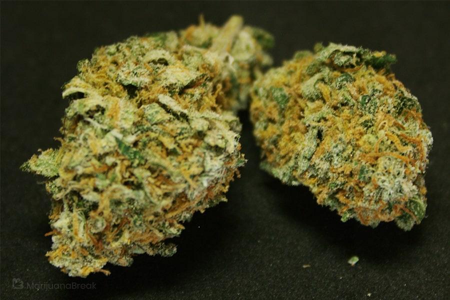 harmonia cannabis