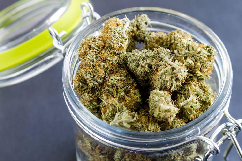 medical marijuana buds on black background