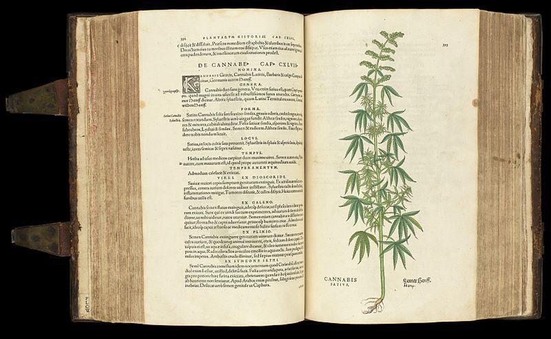 cannabis plant history