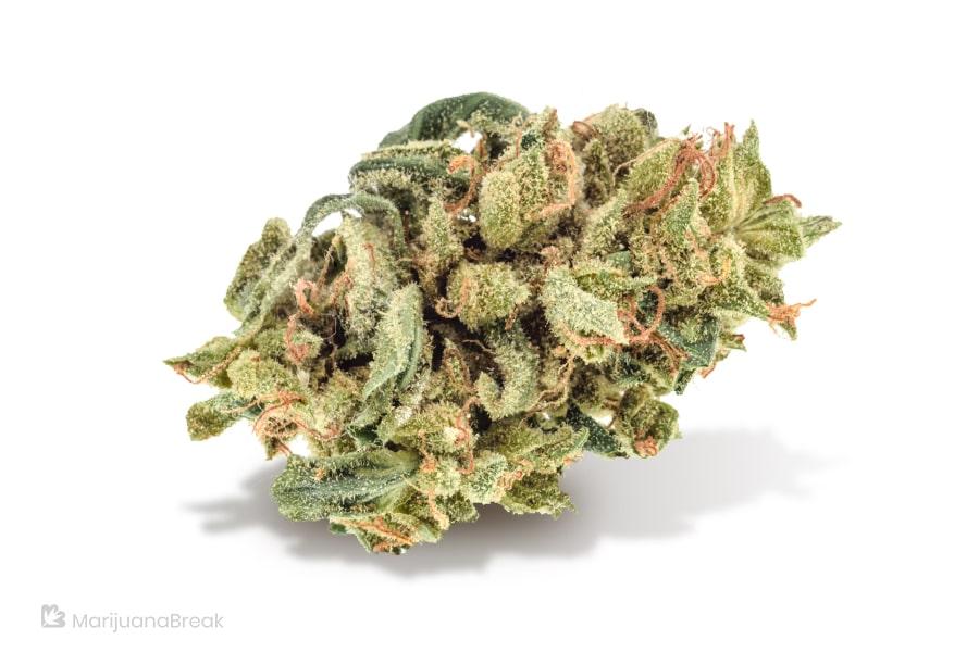 Cannabis Strain Charlotte's Web