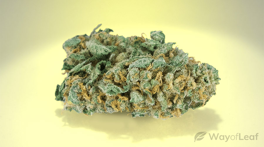 wol-article pic-best marijuana strains for abdominal pain crohn's disease