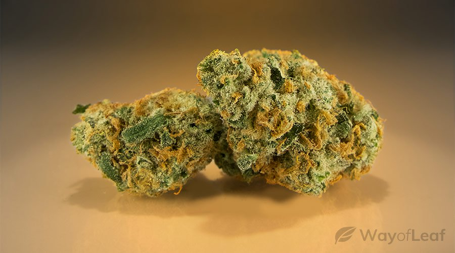 wol-article pic-best marijuana strains for anxiety