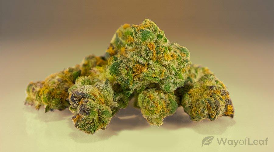 wol-article pic-best marijuana strains for arthritis