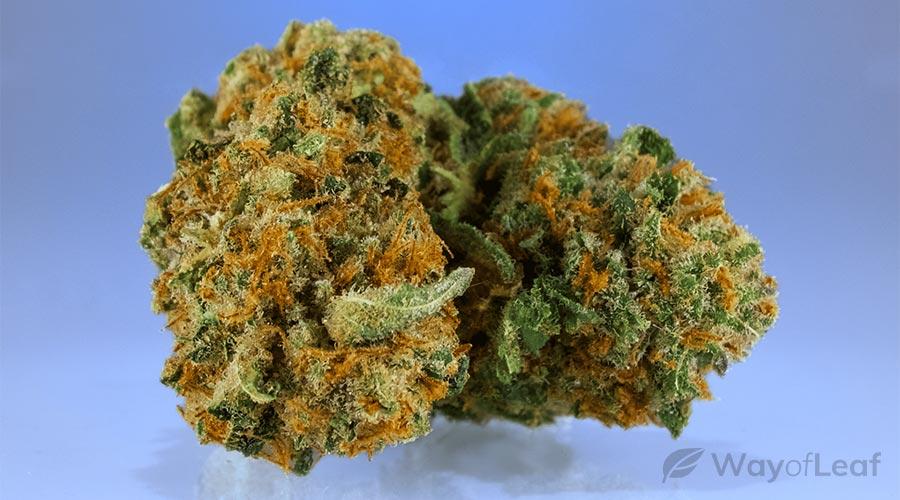 wol-article pic-best marijuana strains for chronic pain