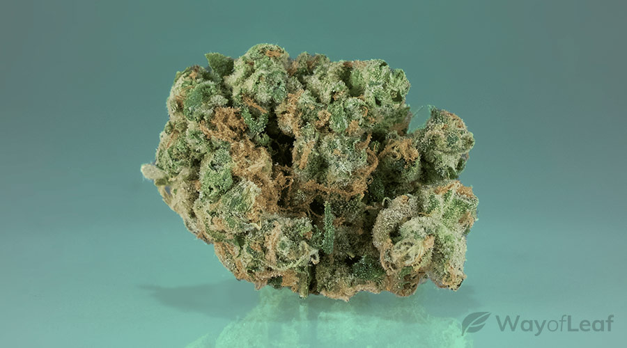wol-article pic-best marijuana strains for multiple sclerosis