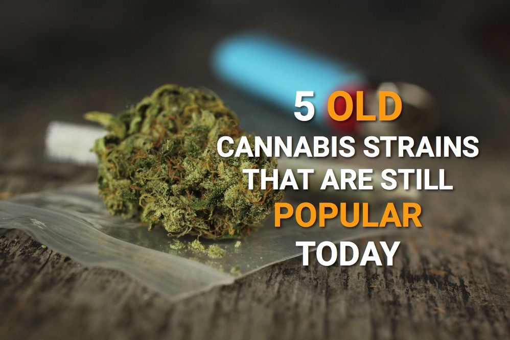 old cannabis strains