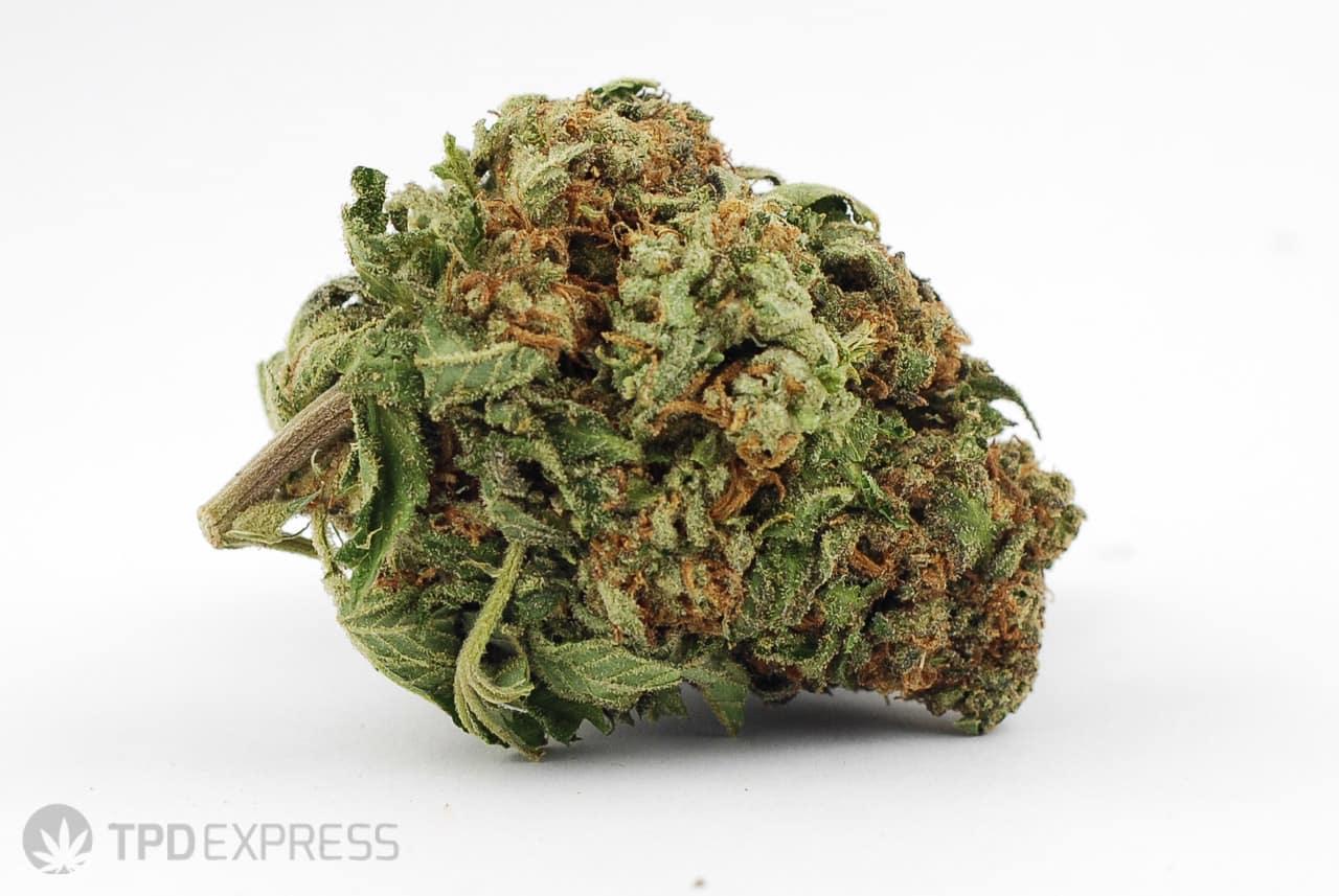 Strawberry Cough (The Marijuana Strain that's a Fruity Sensation)