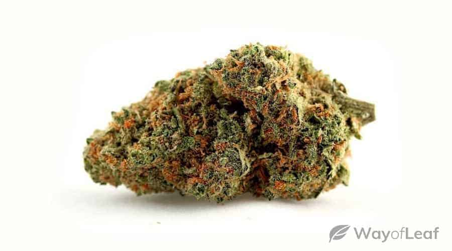skunk #1 (one of the most influential marijuana strains of all time)
