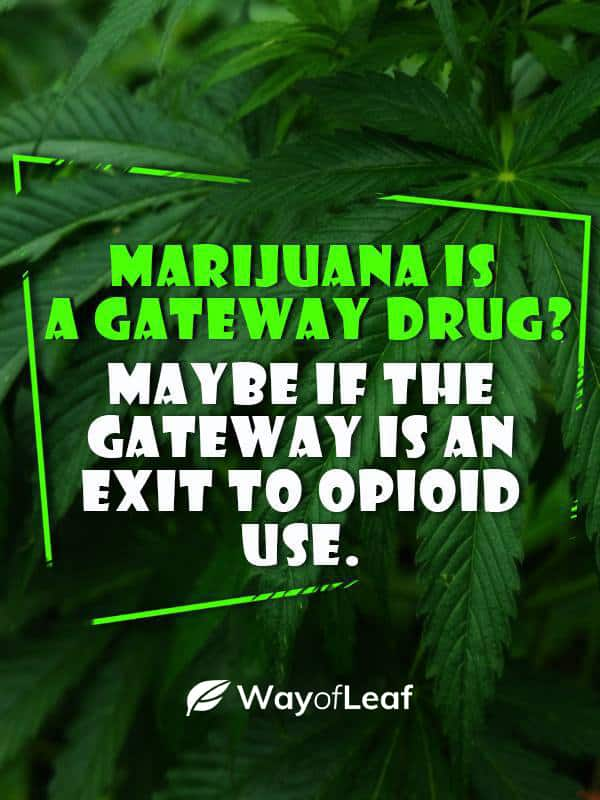 Cannabis Is Conclusively NOT a Gateway Drug