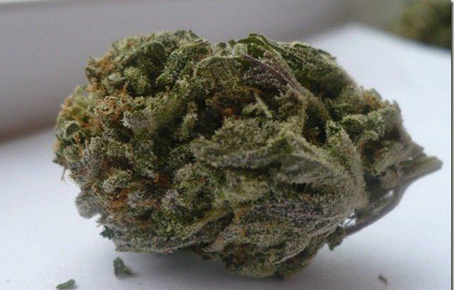 Goo (The Connoisseur's Marijuana Strain)
