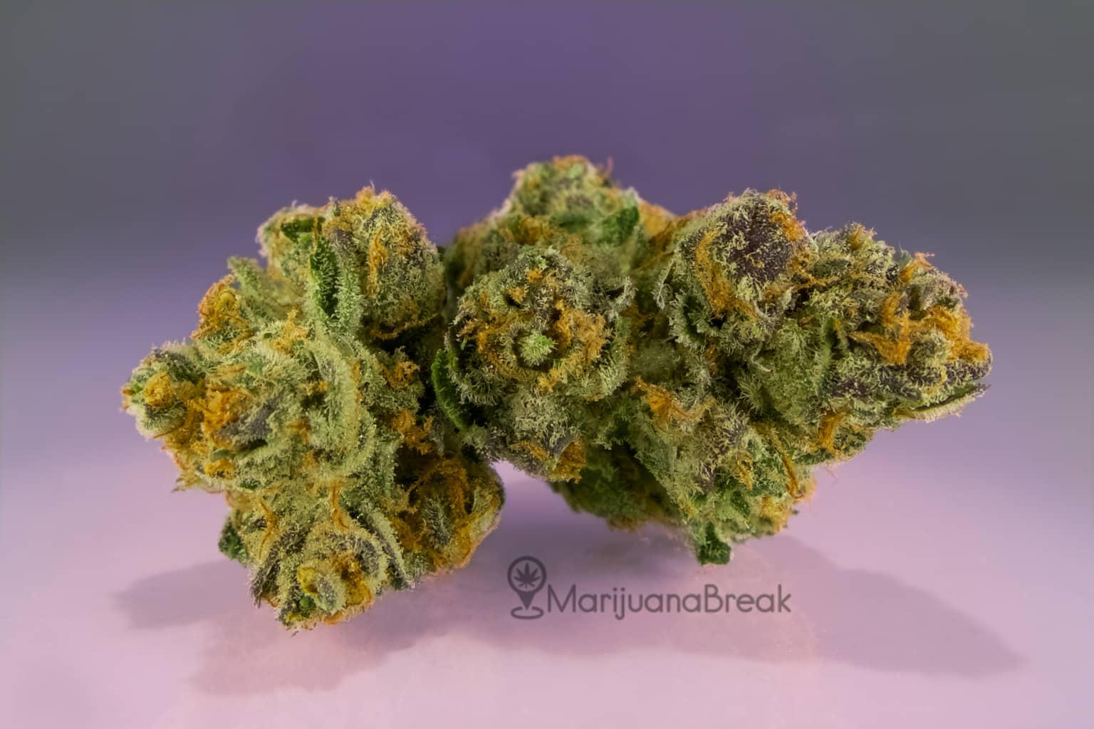 granddaddy purple (indica marijuana strain)