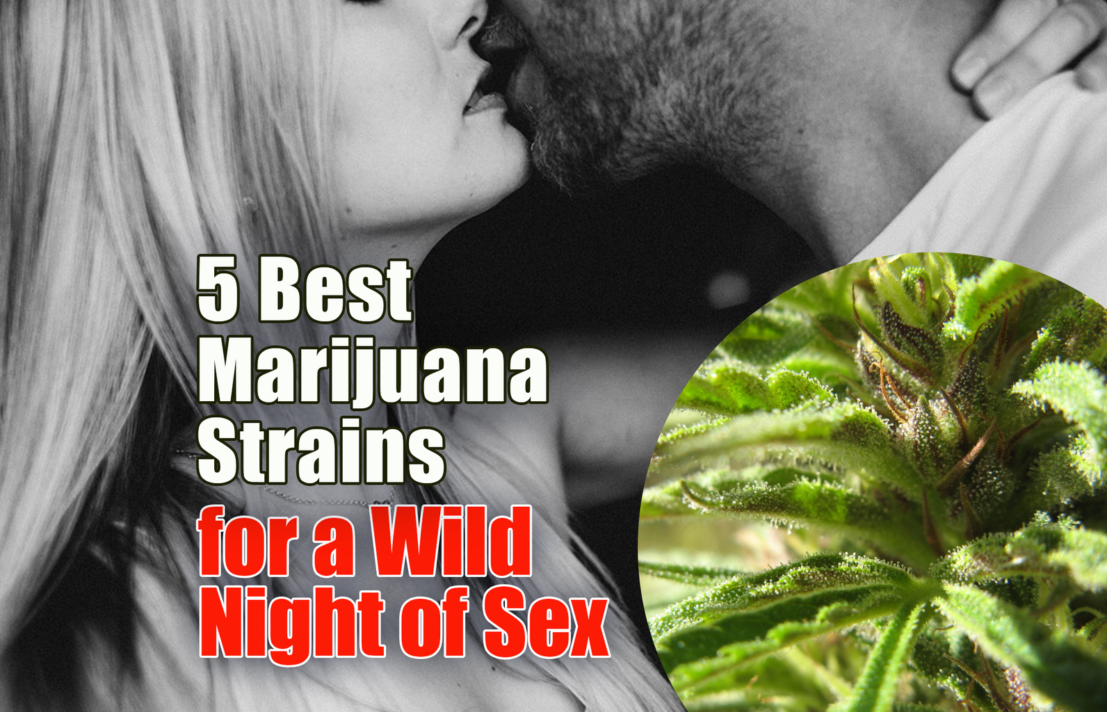 5 Best Marijuana Strains for a Wild Night of Sex