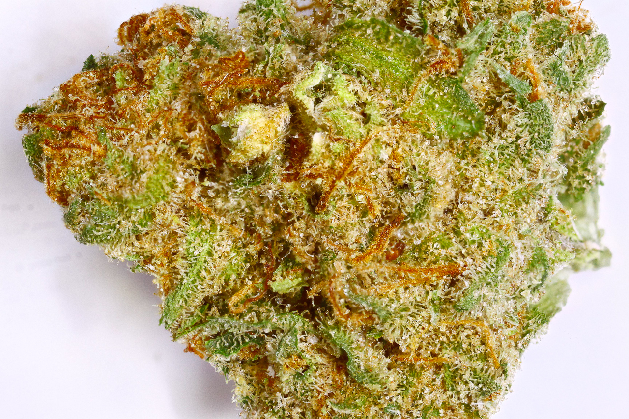 pennywize cannabis strain