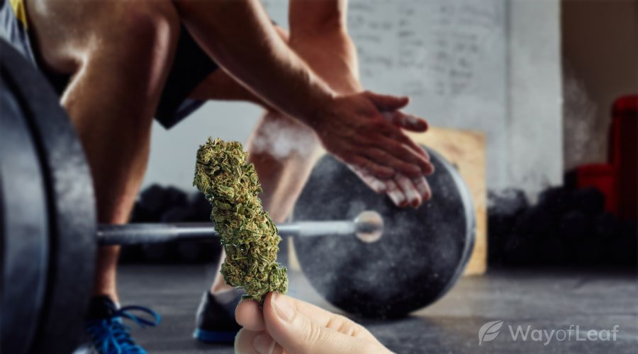 cannabis strains for the perfect aerobic workout [sativa, or indica]