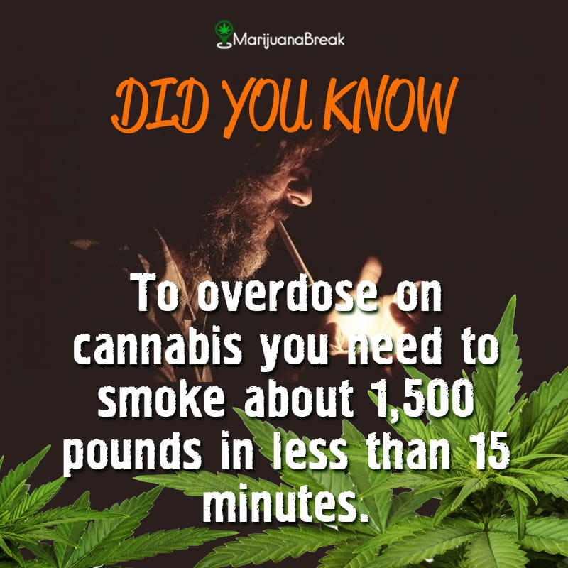 there has never been a weed overdose