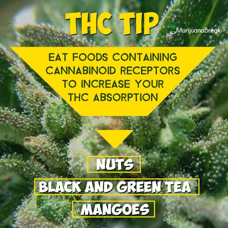 thc tip