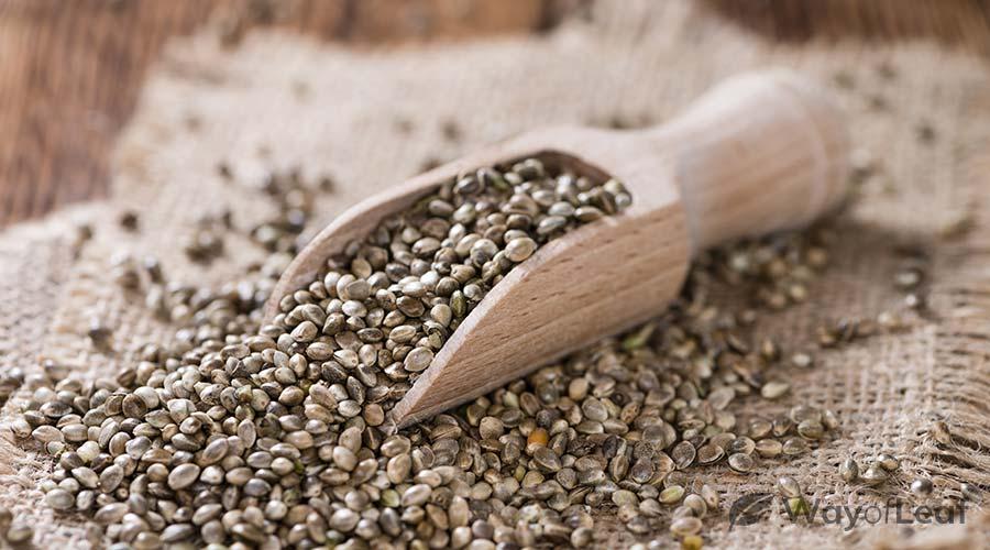 do-hemp-seeds-make-you-tired