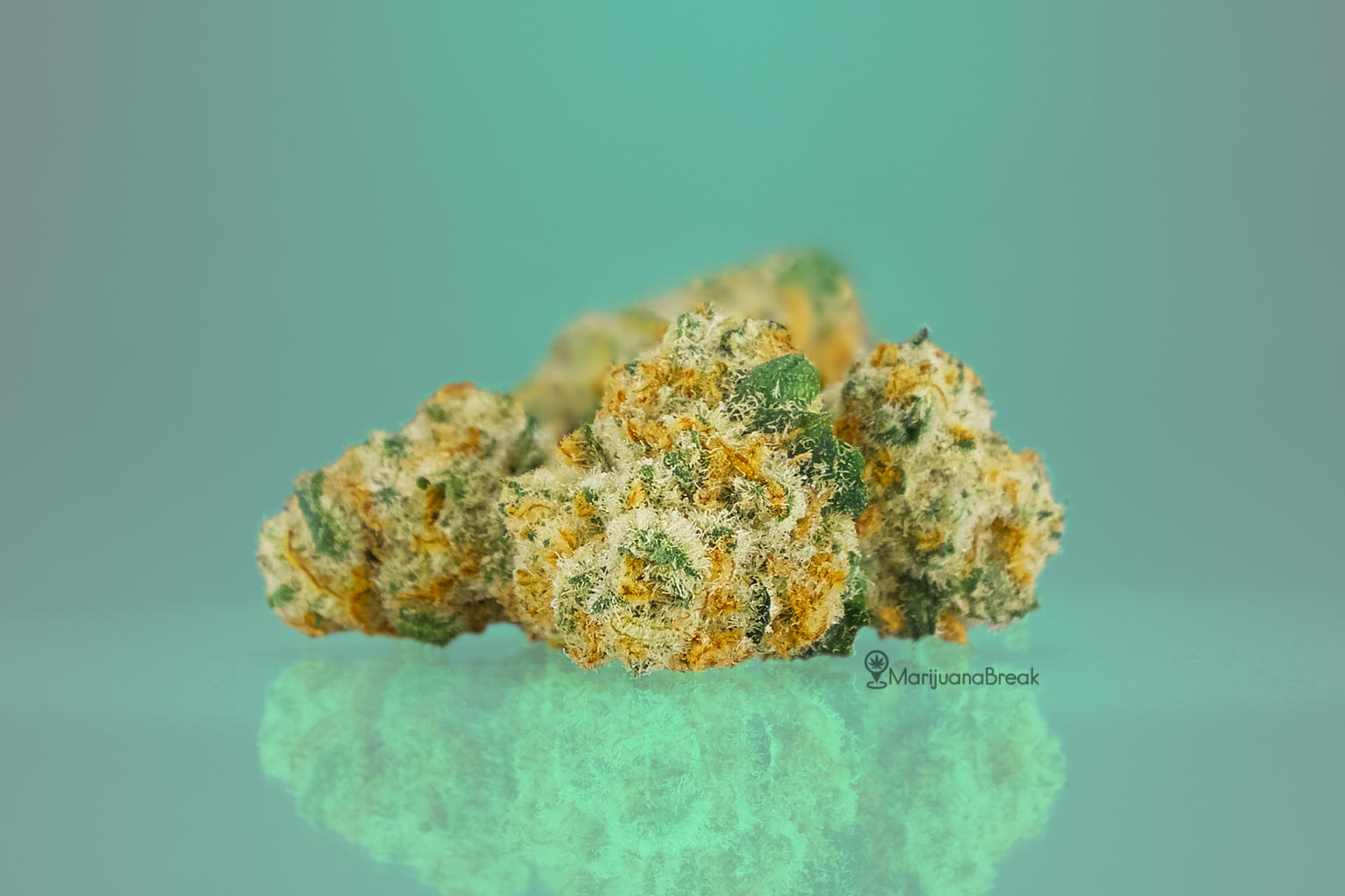 Cannatonic Cannabis Strain
