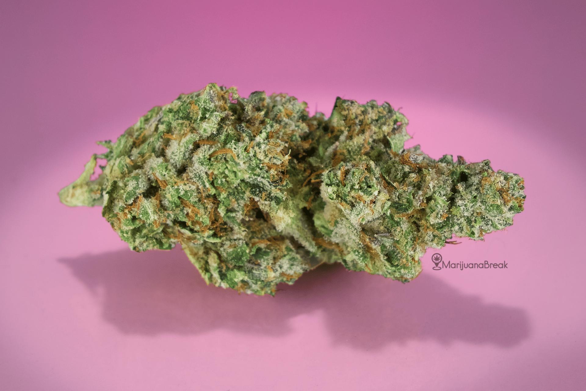 Gelato High Marijuana Strain