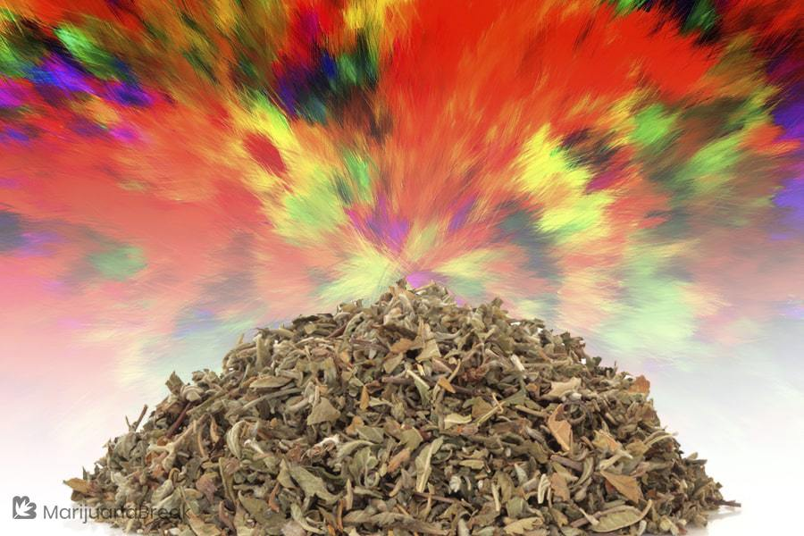 why is synthetic marijuana dangerous