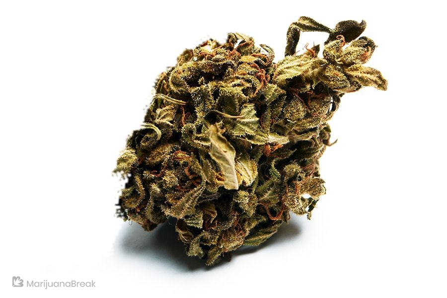 best strains of marijuana