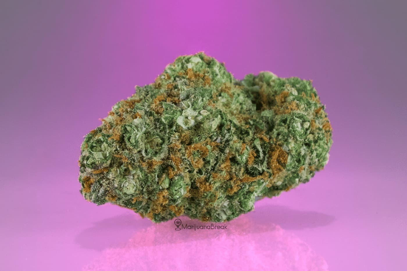 Cinderella 99 Marijuana Strain (Hybrid)