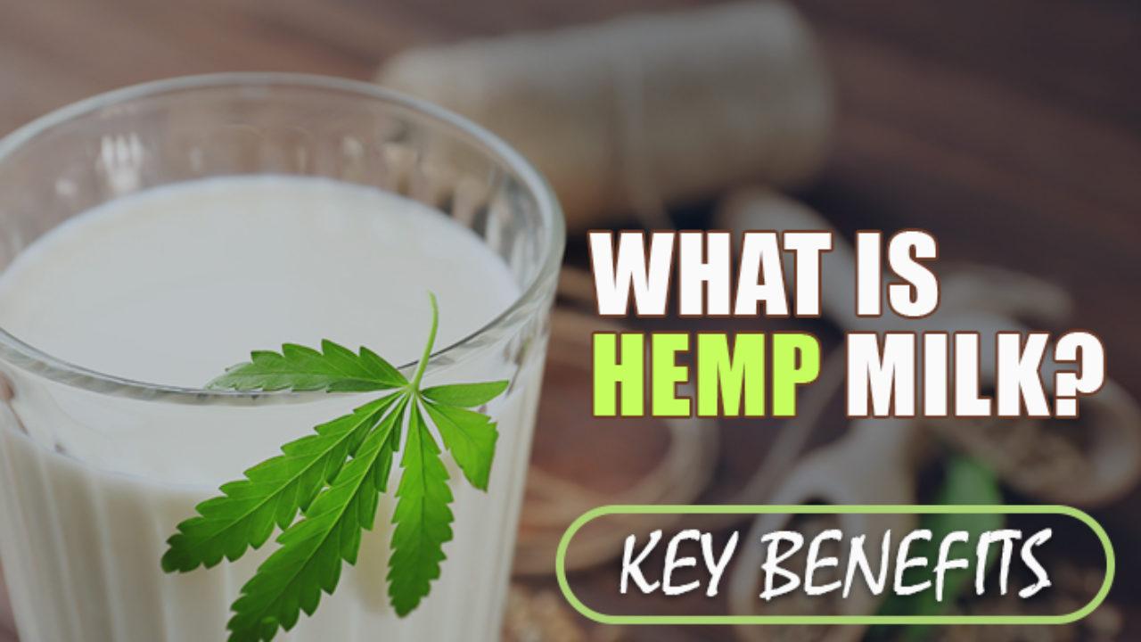 What is Hemp Milk [Key Benefits]