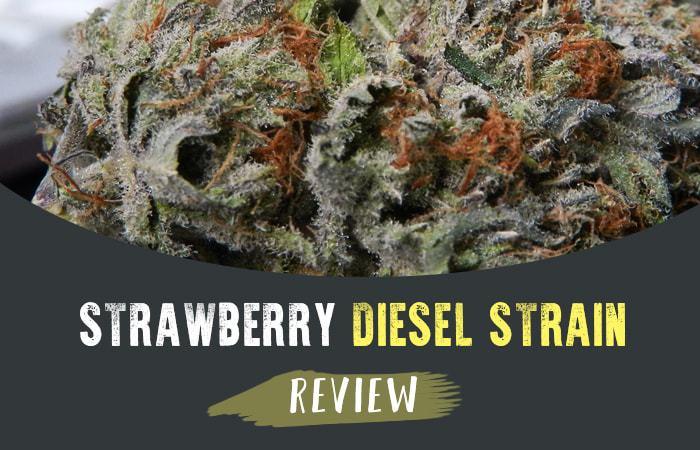 Strawberry Diesel Strain Review