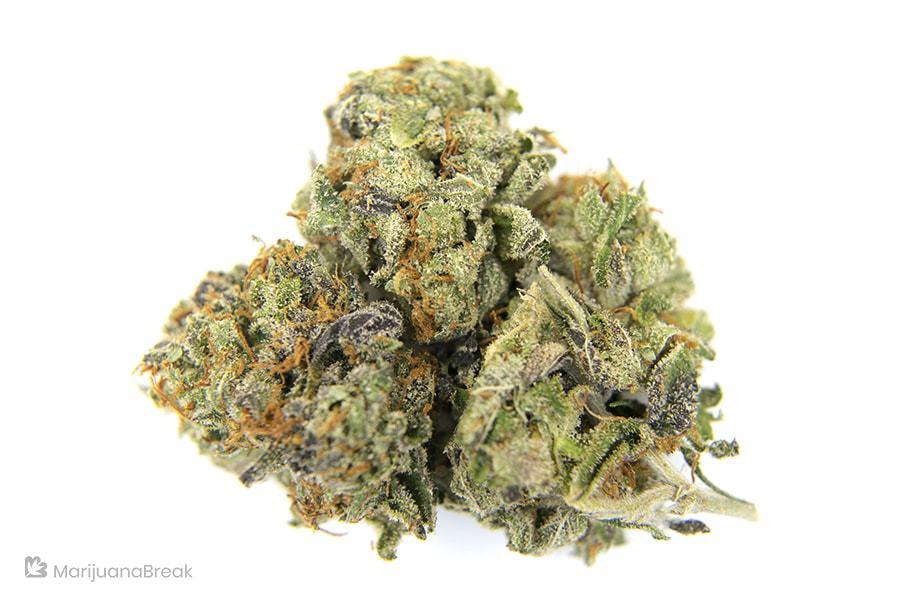 marijuana strains for alcoholism and addiction