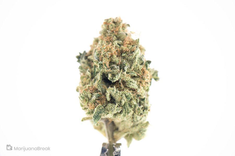 marijuana strains for alcoholism