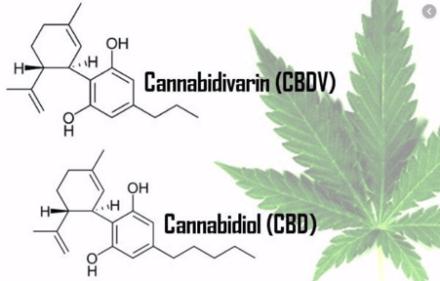 cbdv – cannabidivarin