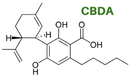 cbda – cannabidiolic acid